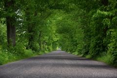 Den gröna allén