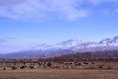 Centralasiatiskt landskap