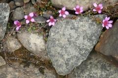 Stenhjärta med blommor